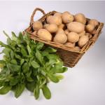 Pommes de terre «grenaille»