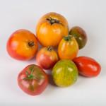 Tomates Anciennes Bio